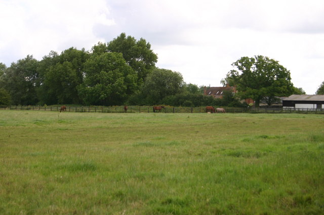 Horses by Twyford Mill