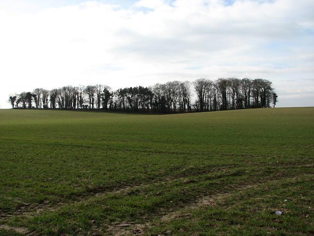 Drift Plantation