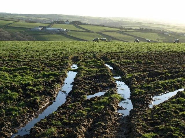 Field and sheep near Trelay