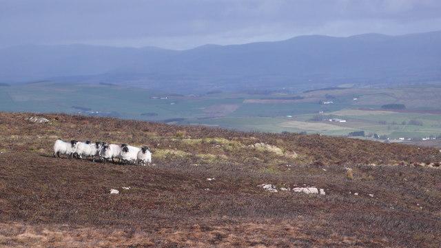 Hilltop grazing