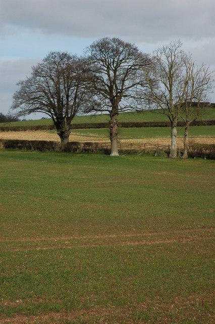 Trees near Bushley Park