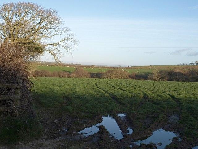 Field near Trevillian