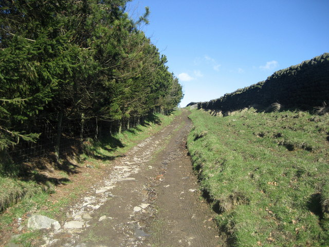 Track near Ghyll Grange