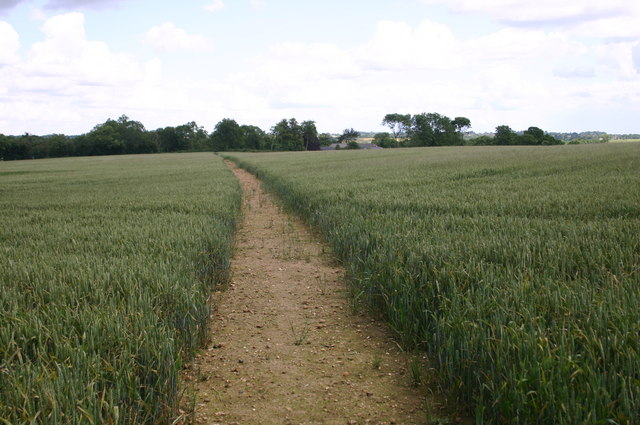 Clear path through the crops