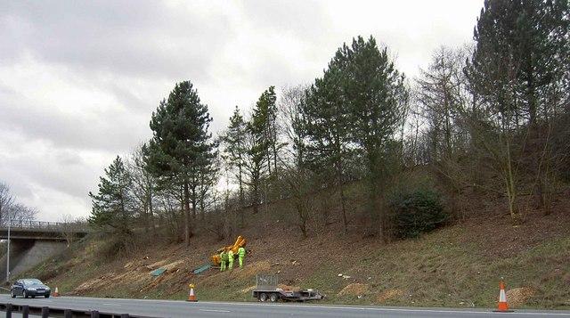 Grubbing up tree stumps