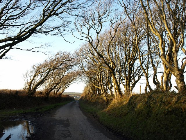 Laneside trees at Trenannick
