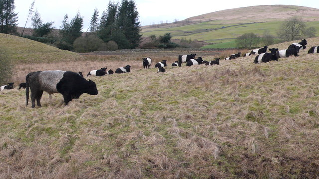 Belties on road to Marglolly