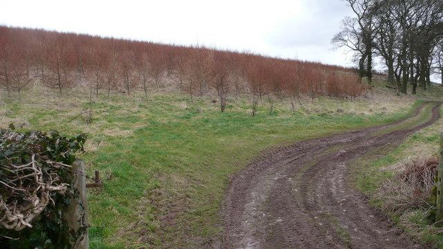 Tree 'nursery' beside Hemplands Farm