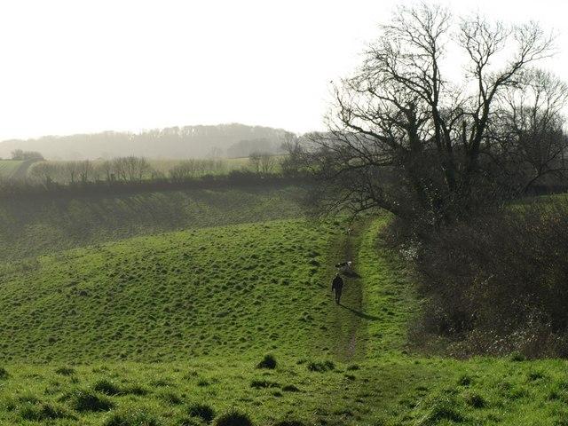 Field at Conqueror Wood