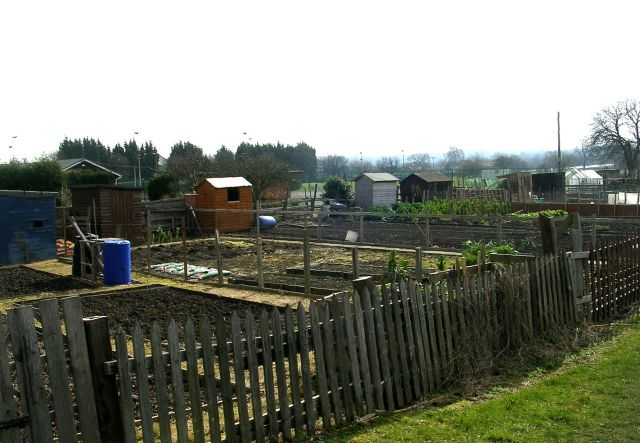 Allotments - off Stutton Road