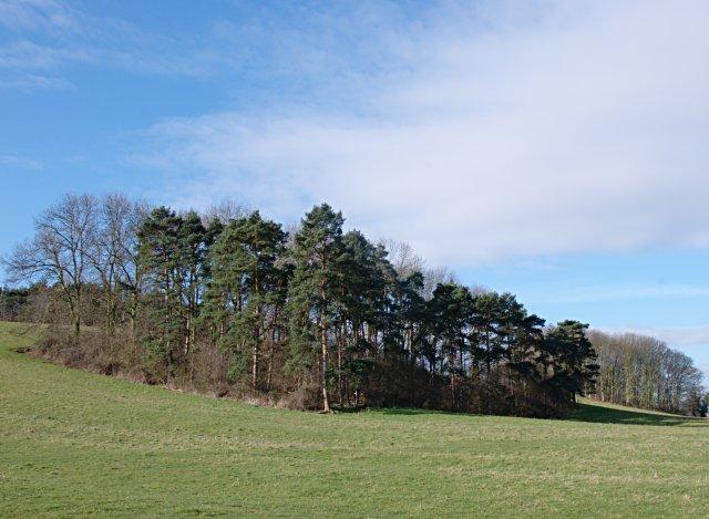 Plantation on Daleacre Hill