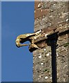SX8663 : Bird on tower, St John the Baptist church, Marldon : Week 9