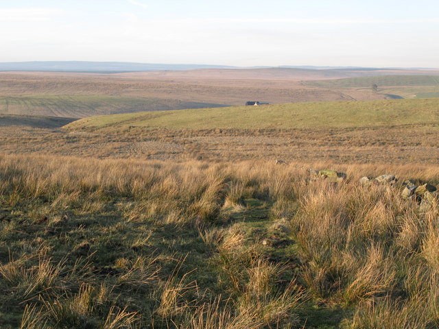 Rough pastures south of High Tipalt (3)