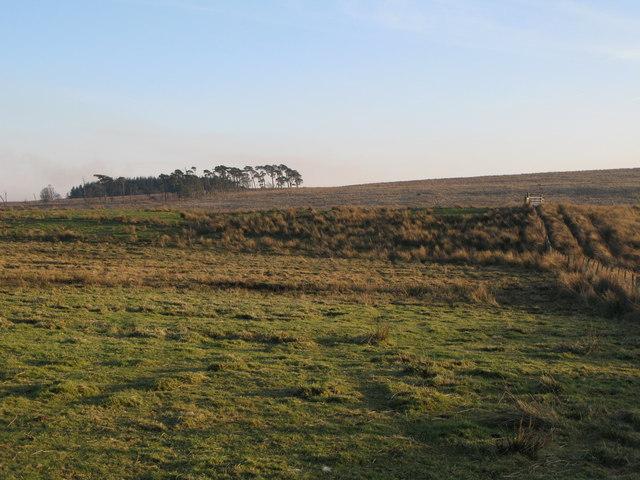 Hangingshields Rigg below North Plantation (2)