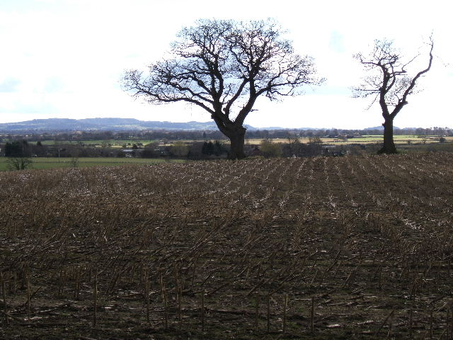 Field near Ferma Lane