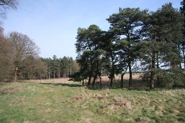 Larling Heath