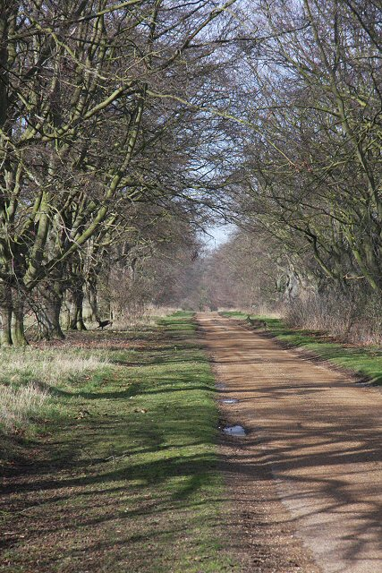Track to Rakebottom Farm