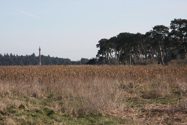 Maize crop on the Elveden Estate