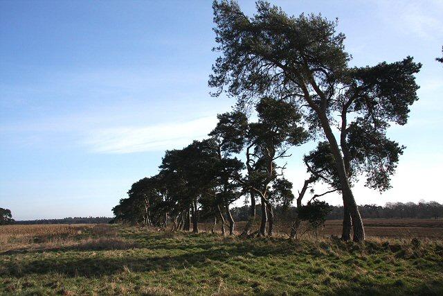 Trees leading to Weather Heath