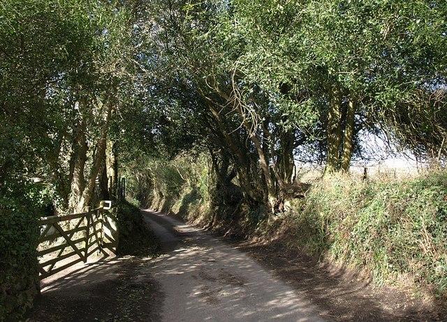 Lane near Langaford