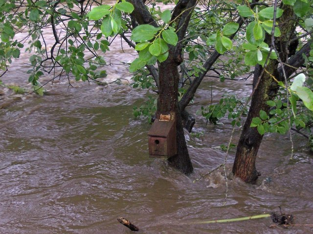 Bird Box during the Oughtibridge Flood in June 2007