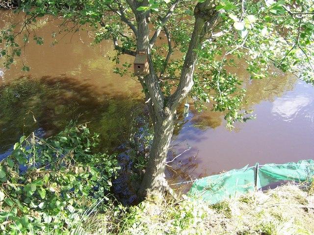 Bird Box after the Oughtibridge Flood in June 2007