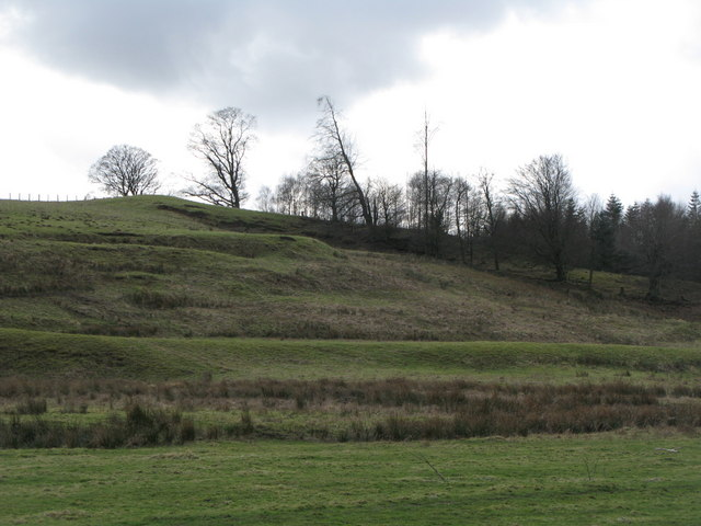Pastures and plantation on the south bank of the River East Allen