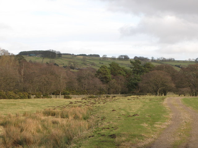 Haugh near Bridge Eal