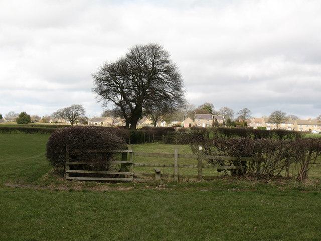 Path to Bishop Thornton