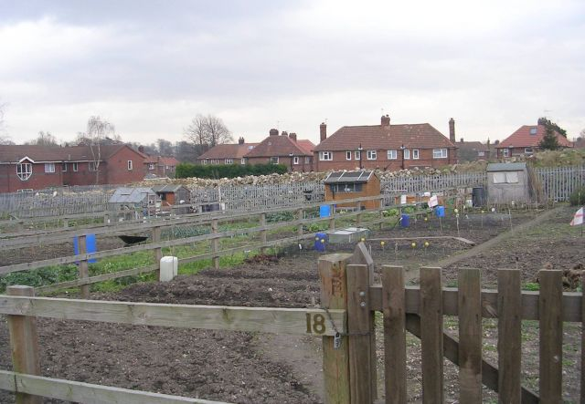Allotments - Oxton Lane