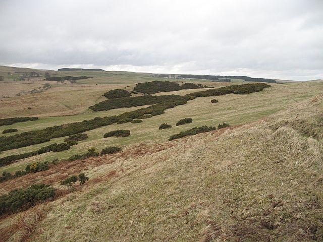 Whins, Wiltonburn Hill
