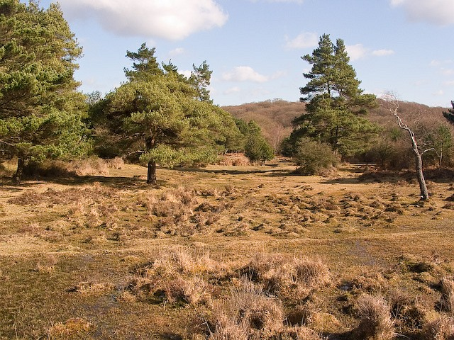 Boggy ground west of Ocknell Inclosure, New Forest