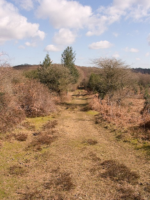 Track leading towards Ocknell Inclosure, New Forest