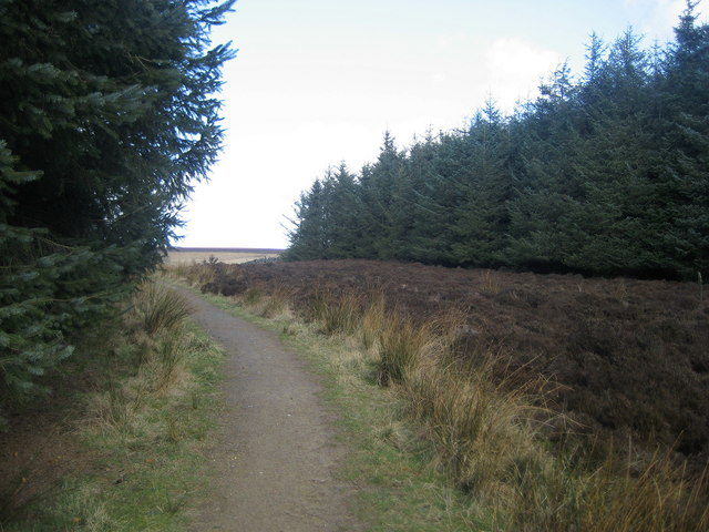 Footpath in Rivock Plantation