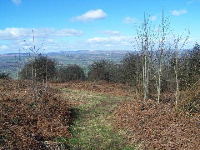 Footpath Junction on Merbach Hill