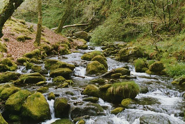 Stream south of Dolgoch