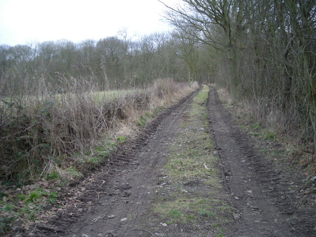 Track to Bannister's Coppice.