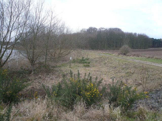 Thoresby Estate - Track View near Lake