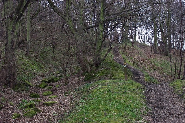 Quarry Track and Footpaths in Strangstry Wood
