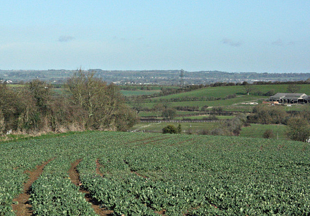 2008 : Oilseed Rape near Bullenhill
