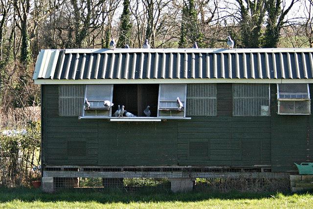 2008 : Pigeon Loft at Heath Hill