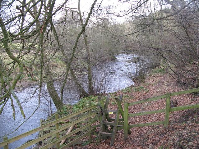 The River East Allen near Kittygreen (3)
