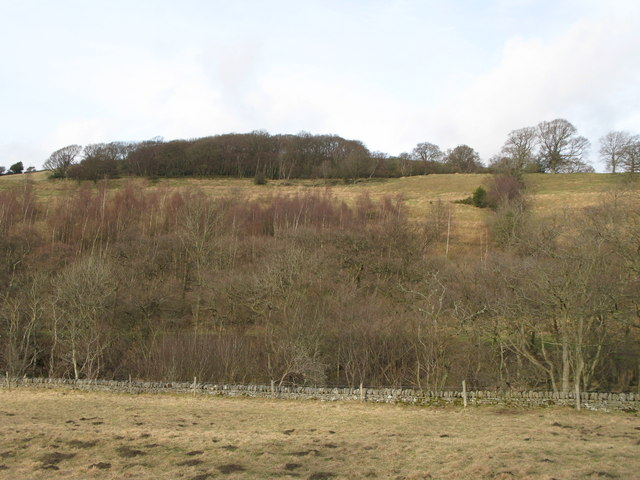 Haugh and woodlands on the north bank of the River East Allen