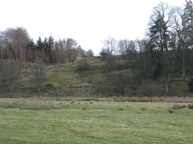 Pastures and plantation on the south bank of the River East Allen (2)
