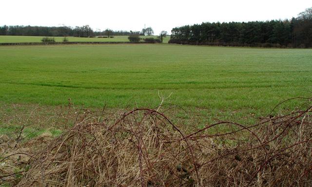 Farmland North of Bentley