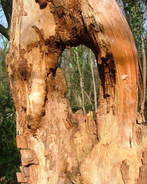 Deadwood, Rosecroft Wood
