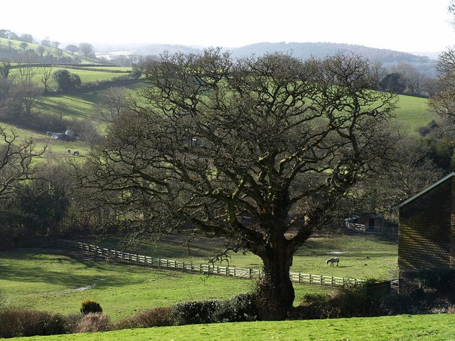 Tree on edge of Chagford Open Field