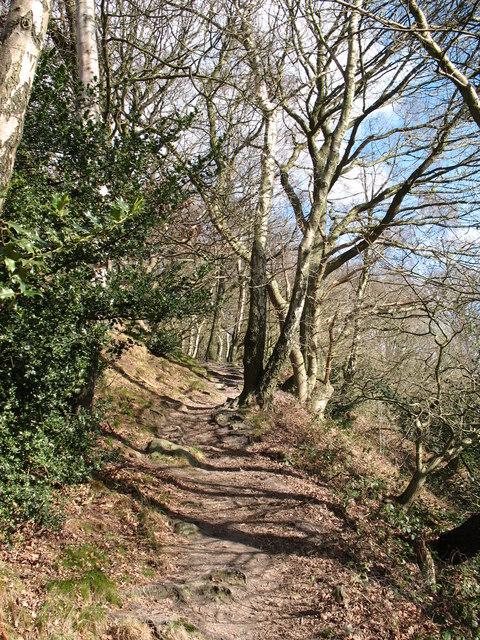Path through Garbutt Wood