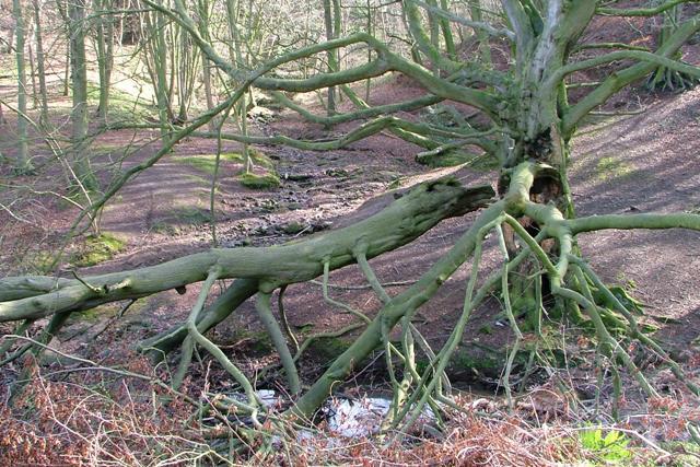 Stream Junction, Handale Wood