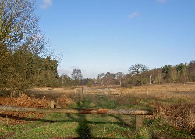 Clearing in Clumber Park